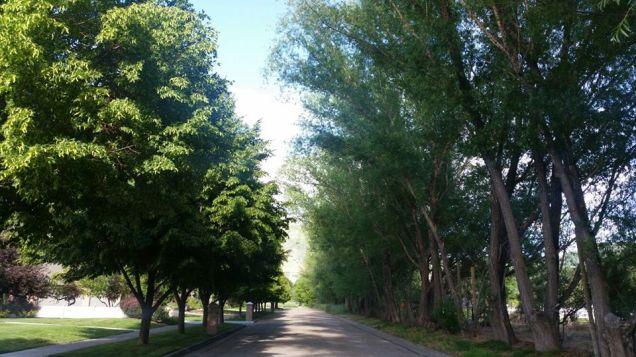 treesDivinity